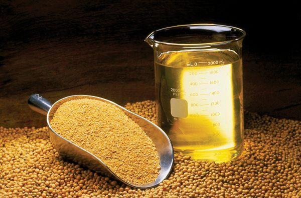 Essenzielle Fette in der Ernährung: Das optimale Omega 3 zu Omega 6 Verhältnis
